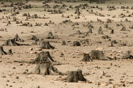 deforestazione_2